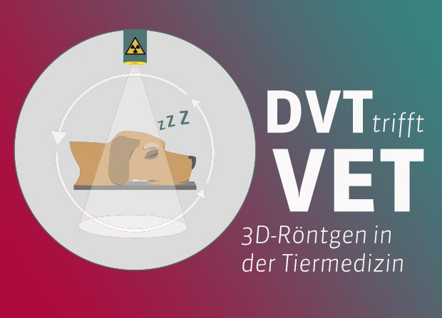 Hund im DVT. 3d-Röntgen Scheme zum DVT in der Tiermedizin